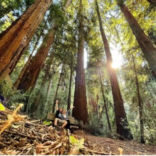 Pic from @charlt13 @portola_rsp #CAstateparks #santacruzmountains #redwoods #redwoodforest ##hikeSafely#portolaandcastlerockfoundation