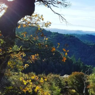 Despite the disaster of the #czulightningcomplex fires, many of our other parks are open for #sociallydistanced #hiking. #hikeSafely #castlerockstatepark in Fall #castateparks ##santacruzmountains #californiafallcolors #california #goldenstate #mistymountains #portolaandcastlerockfoundation