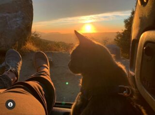 Pic from @gravesmaria Sunset @castlerock_sp (This is taken from the side of the road; please don't bring your pets on the trails of #castlerockstatepark ) #castateparks #sunset #mistymountains #sunsetphotography #catsofinstagram #cats #santacruzmountains #portolaandcastlerockfoundation