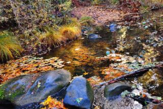 Pescadero Creek #hikeSafely #socialdistancehiking #covid19 #getOutside #portolaredwoodsstatepark #PescaderoCreek #californiafallcolors #riparian #creek #creekside #CAstateparks #redwoods #redwoodforest #portolaandcastlerockfoundation @portola_rsp